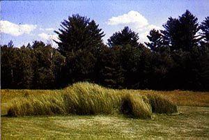 El movimiento Land Art como método para entender las intervenciones en elpaisaje.
